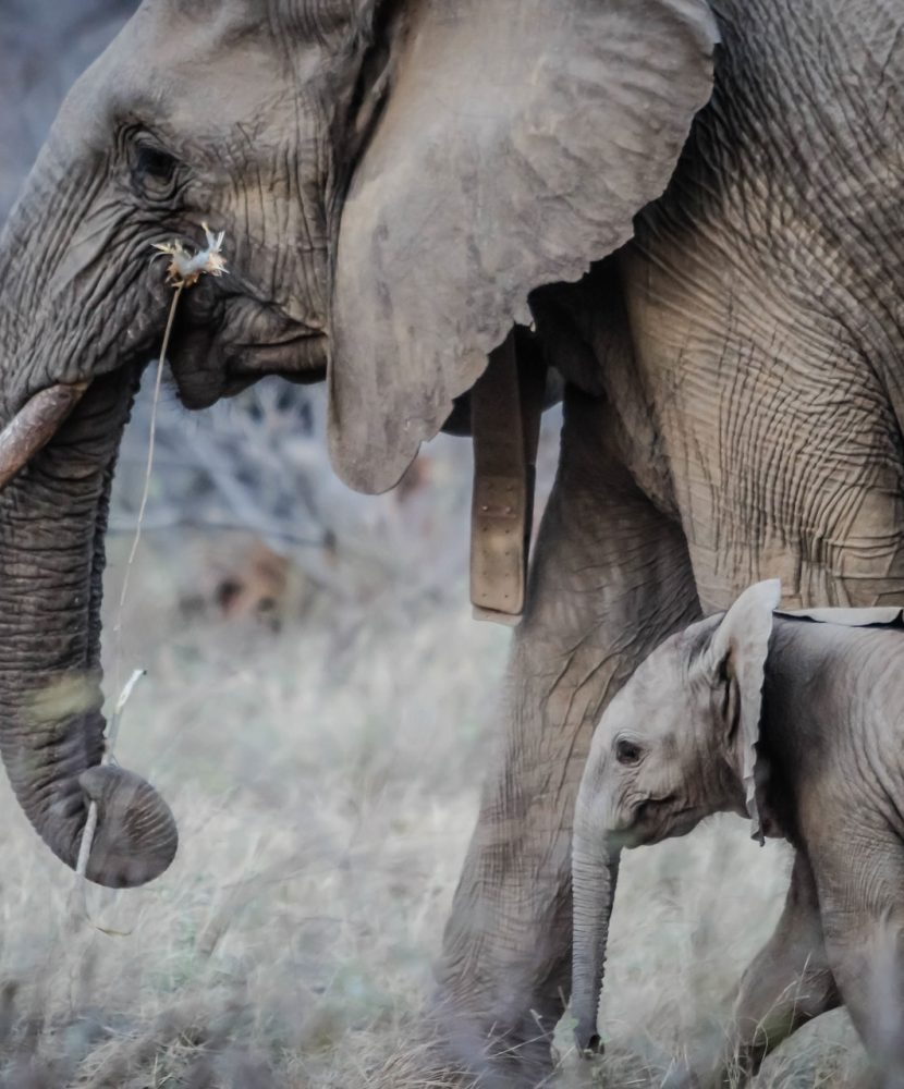 The Elephant Minds Foundation continues its work
